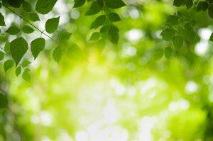 servicios ambientales - Ingeniería Social